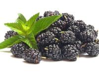 Černice a ich účinky na zdravie človeka